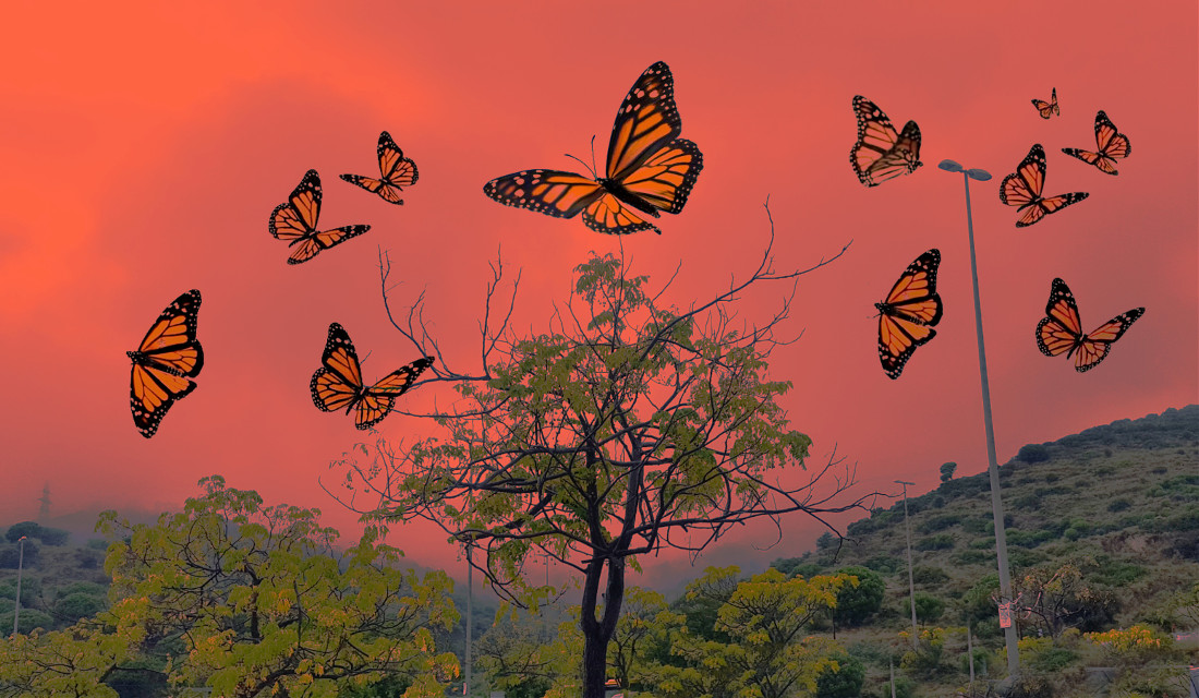 #freetoedit #clouds #fog #orange #butterflies #hills #trees #nature #landscape #heypicsart #colors #colorful #stayinspired #dream #vibes