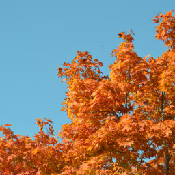 photography nature autumn leaves freetoedit