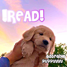 pfps imback puppy