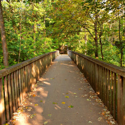 freetoedit landscape nature bridge autumn