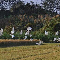 birds harvest