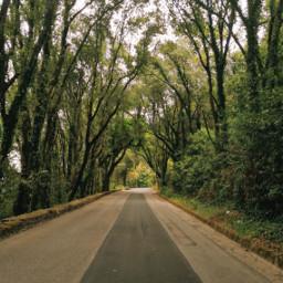 photooftheday photography photostory trees streetphotography street mountain naturephotography nature freetoedit