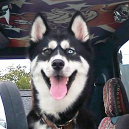 freetoedit dog dogsofpicsart petsofpicsart pet