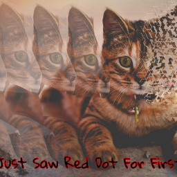 freetoedit remixedit kitten mesmerized overload mindblown adorable picsartpets picsarteffects mypicsartremix toomuchcuteness