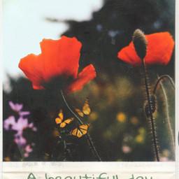 beautiful_day freetoedit