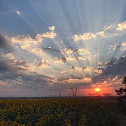 sun sunflower pcgoldenhour goldenhour