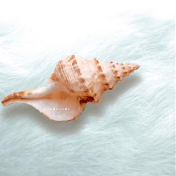 shell aesthetic