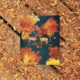 autumn autumnleaves autumnvibes autumncolors autumnleaf autumnfeels autumnart deer deers forest cervo cervi autunno autunnoartistico autunnonaturalistico autunnoacolori ircchalkboarddesign chalkboarddesign