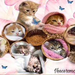 cats pets cute sweet nice ircbountifulbaskets freetoedit
