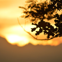 sunset landscape photography freetoedit pcgoldenhour goldenhour