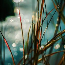 lightandshadows fallcolors lake nature sonyalpha adobelightroom adobephotoshop