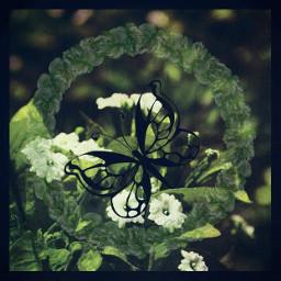 animaux papillon fleurs feuilles vegetation naturelovers fun fan style magnifique couleurs logo dessin piscart freetoedit