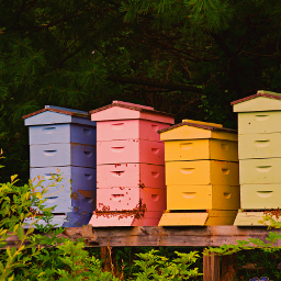 outdoorphotography beehives colourful summervibes freetoedit