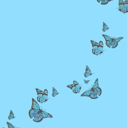 freetoedit blue background backgrounds butterfly butterflies bluebutterfly bluebutterflyedits bluebutterflies wallpaper wallpapers simple cute trending trendy trend aesthetic artistic edited emotions edit interesting onedirection sticker happy