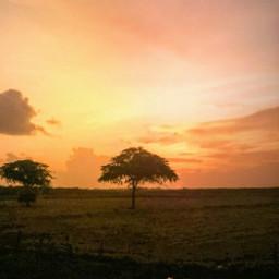 freetoedit yellow sunset pcgoldenhour goldenhour