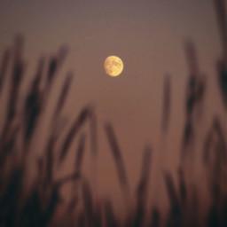 moon nice freetoedit