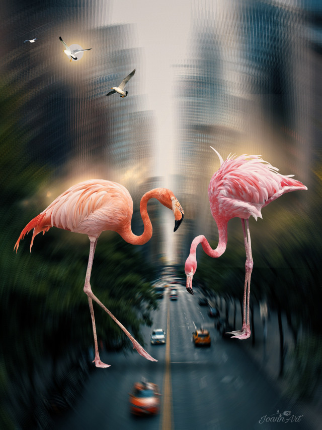 #surreal #city #road #cars #flamingos #birds #giantanimals #blureffect #artistic #myedit #myart #madewithpicsart @picsart #JoannArt #becreative #HeyPicsArt #picsartmaster