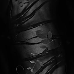 freetoedit picsart remixed remixit myedit photoedit photomanipulation digitalart digitaledit madewithpicsart editedbyme editedwithpicsart surrealism magic fantasy stayinspired picsarteffects unsplash pexels shutterstock pastickers blackandwhite ant plant