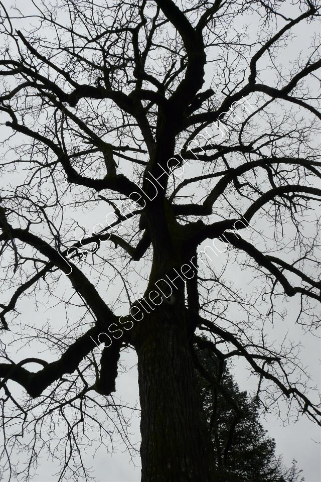 Spooky  tree 🎃🌚👀 If u wish use this pix please contact  me thanks 🥚💎 #jossettedhermanniphotography  #spooky  #hakloween  #halloweenspirits  #halloween🎃  #treeoflife  #trees #spookytrees  #naturephotography  #nature #naturejournal  #blackandwhitephotography