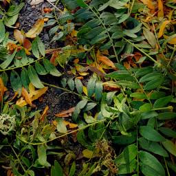 autumm fall nature outforawalk lookdown oregon hdr2 freetoedit