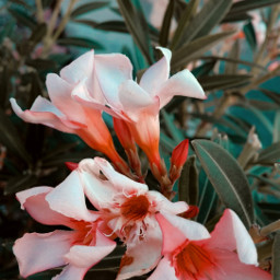 flowers sunday garden beautifullife sundayvibes