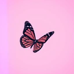 freetoedit remixit plzfollow freepfp aesthetic pink butterfly sparkle teen glossy darling cute vsco girlart