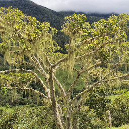 treelove natural
