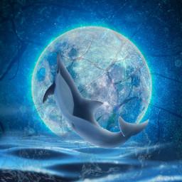 dolphin moon freetoedit