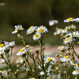 flowers naturelover autumn september