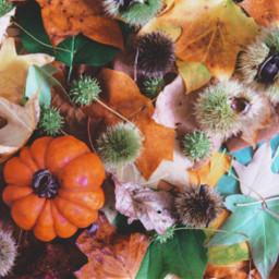 autumn leaves fall flatlay freetoedit