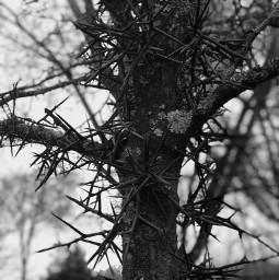 nature tree pcblack&whitenature black&whitenature