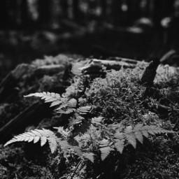 freetoedit black&whitenature