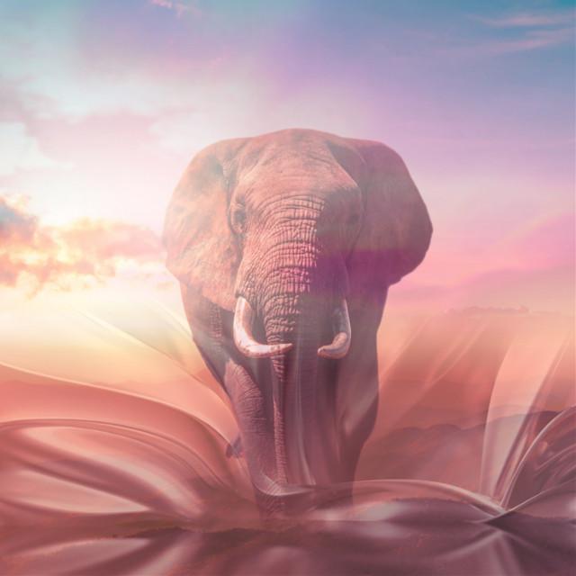 #endangered #elephant #savetheearth #saveouranimals