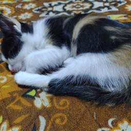 freetoedit photography byme original photographybyme kitten sleeping small cute cutecat heypicsart