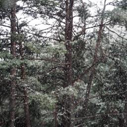 freetoedit snow andorra andorrafreeemotions andorralavella