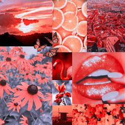 orange naranja anaranjado collage freetoedit ccorangeaesthetic orangeaesthetic