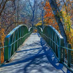 fall photography bridge nature trees freetoedit