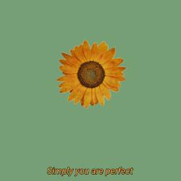 simple youareworthit beautiful green sunflower words freetoedit