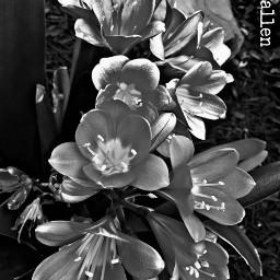 myphotography notfreetoedit donotremix donotedit pcblack pcblack&whitenature