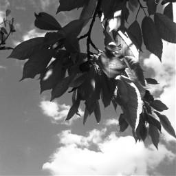 baum pcblack&whitenature black&whitenature