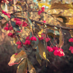 freetoedit autumn flowers forest nature