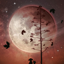 heypicsart silhouette moon inspiration creative heaven nature skylover myedit madewithpicsart freetoedit