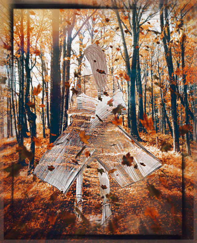 #unsplash#fall #autumn #sketcheffect #leavesfalling