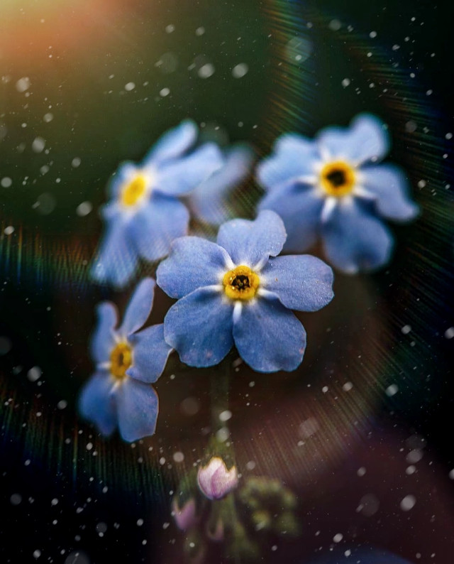 Don't forget to be happy now💙😊 #freetoedit #replay #picsart #forgetmenot #flower #happy #nature #macro #naturelover