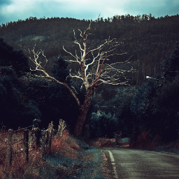 freetoedit photography spooky spookyseason spookyhalloween