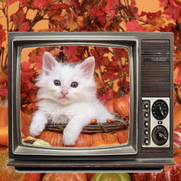 autumn leaves srcsmallscreen smallscreen freetoedit