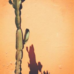 housewall cactus warmcolors yellowlight goldenyellow freetoedit