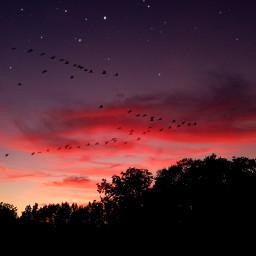sky sunset moon freetoedit silhouette stars birds