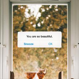 unsplash message messagebubble reminder text quote fall fallseason wallpaper freetoedit