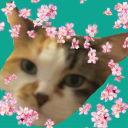 kitty flowers